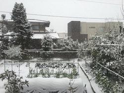 2016年大雪.jpg