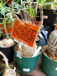 アフリカ植物1.jpg