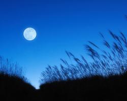 すすきと満月.jpg