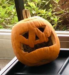 みのうハロウィンかぼちゃ.jpg