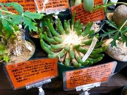 アフリカ植物.jpg