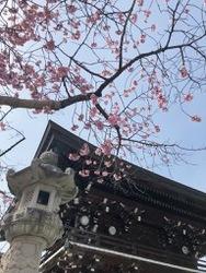 宮地嶽神社続1.jpg