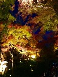 清水寺ライトアップ6.jpg