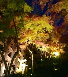 清水寺ライトアップ7.jpg