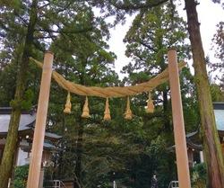 鳥居と杉の木.jpg