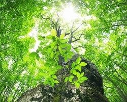 木々 (2).jpg